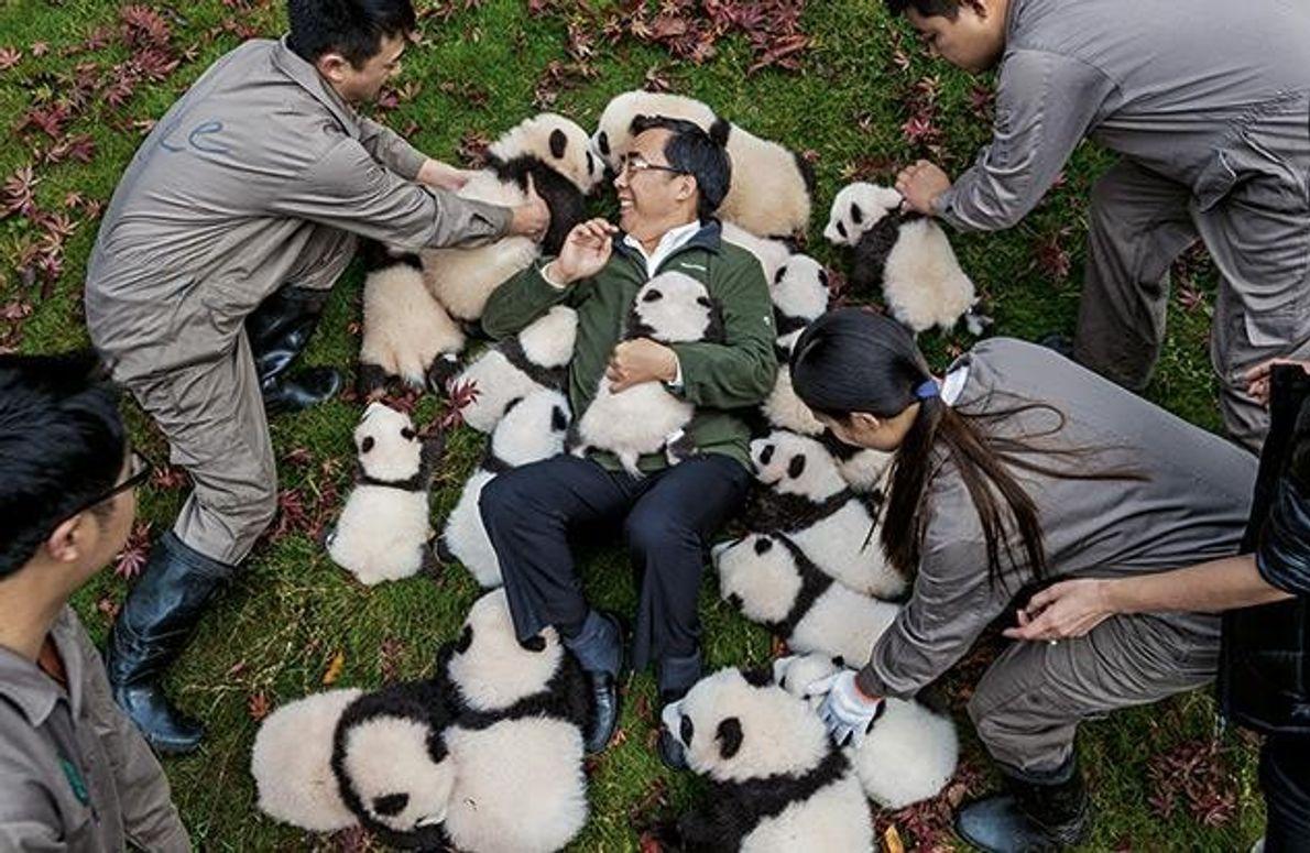 Zhang Hemin (M.) leitet Pandaschutzprojekte in China. Die Jungtiere, mit denen er spielt, wurden 2015 in …