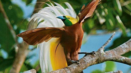 Paradiesvögel: Zählappell im Paradies