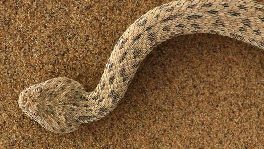 Das faszinierende Leben in der ältesten Wüste der Welt