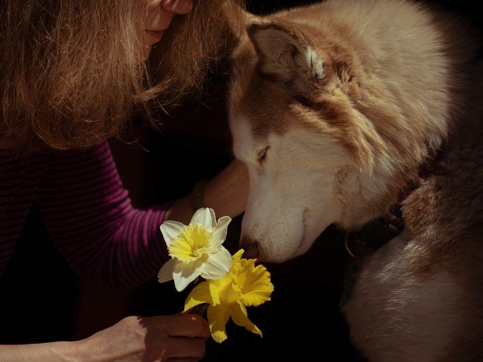 Haustiere helfen uns durch die Pandemie – selbst wenn sie das stresst