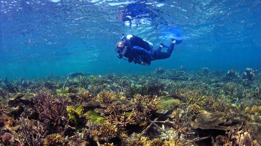 Fünf Gründe, warum es Hoffnung für unsere Korallenriffe gibt
