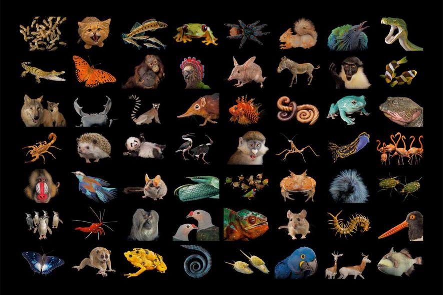 """""""Halbe Erde"""" schützen, um die Artenvielfalt zu retten"""