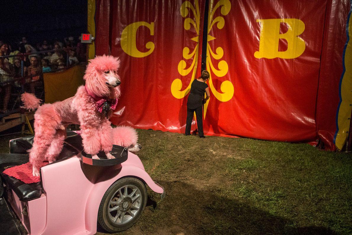 Cole Bros. Circus