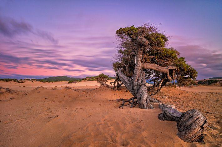 Foto des Märchenbaums am Strand von Piscinas, Arbus, Sardinien