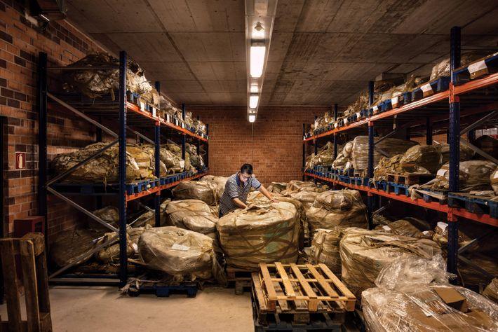 Fossilien-Lager im Hauptsitz des ICP in Barcelona