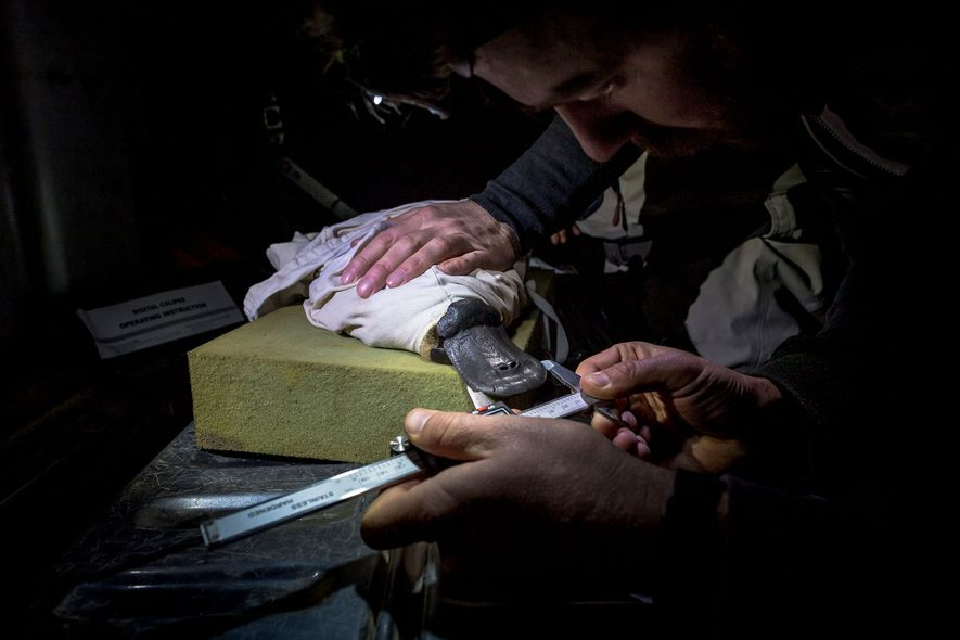 Ein Schnabeltierforscher vermisst den Schnabel eines Tieres, dass im Rahmen einer Studie der Behörde Melbourne Water ...