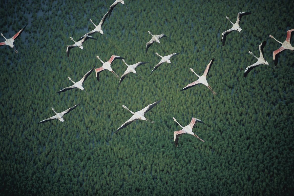 Flamingos über Mosambik