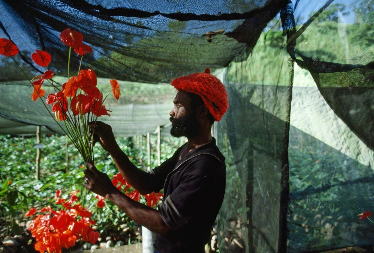 Blumenfarm auf Jamaika