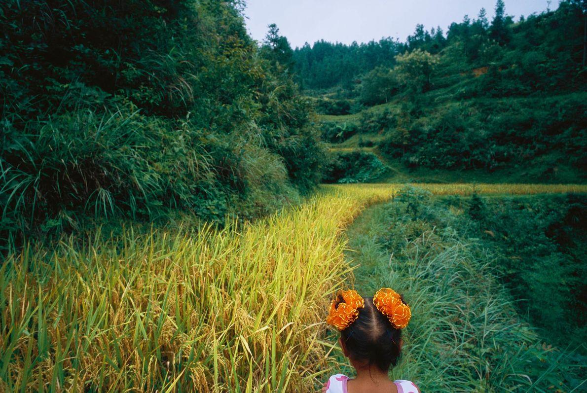 Mädchen in einem Reisfeld in Dimen, China