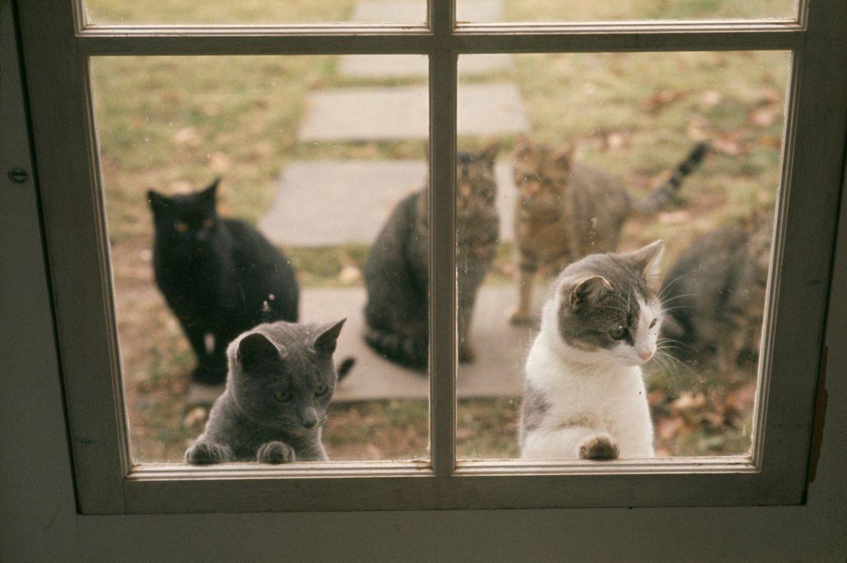 Hauskatzen an einem Fenster