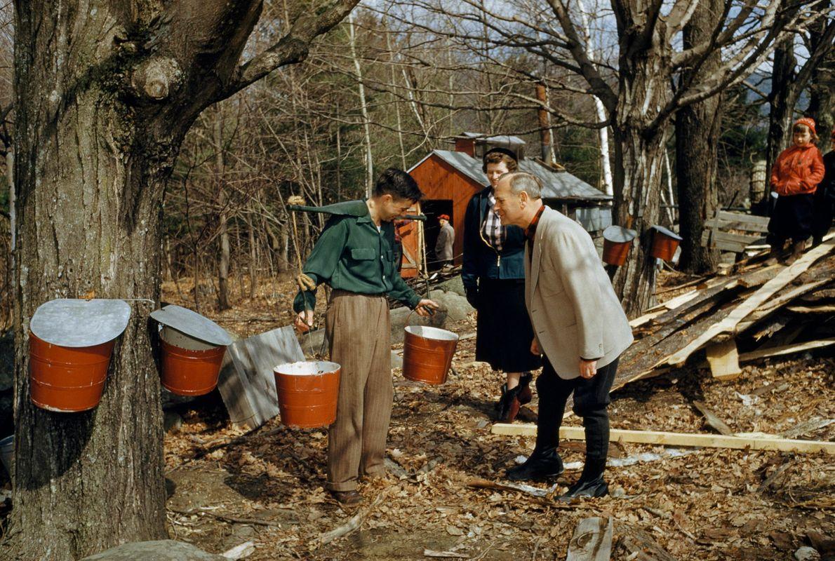 Ahornsaft-Ernte in New Hampshire