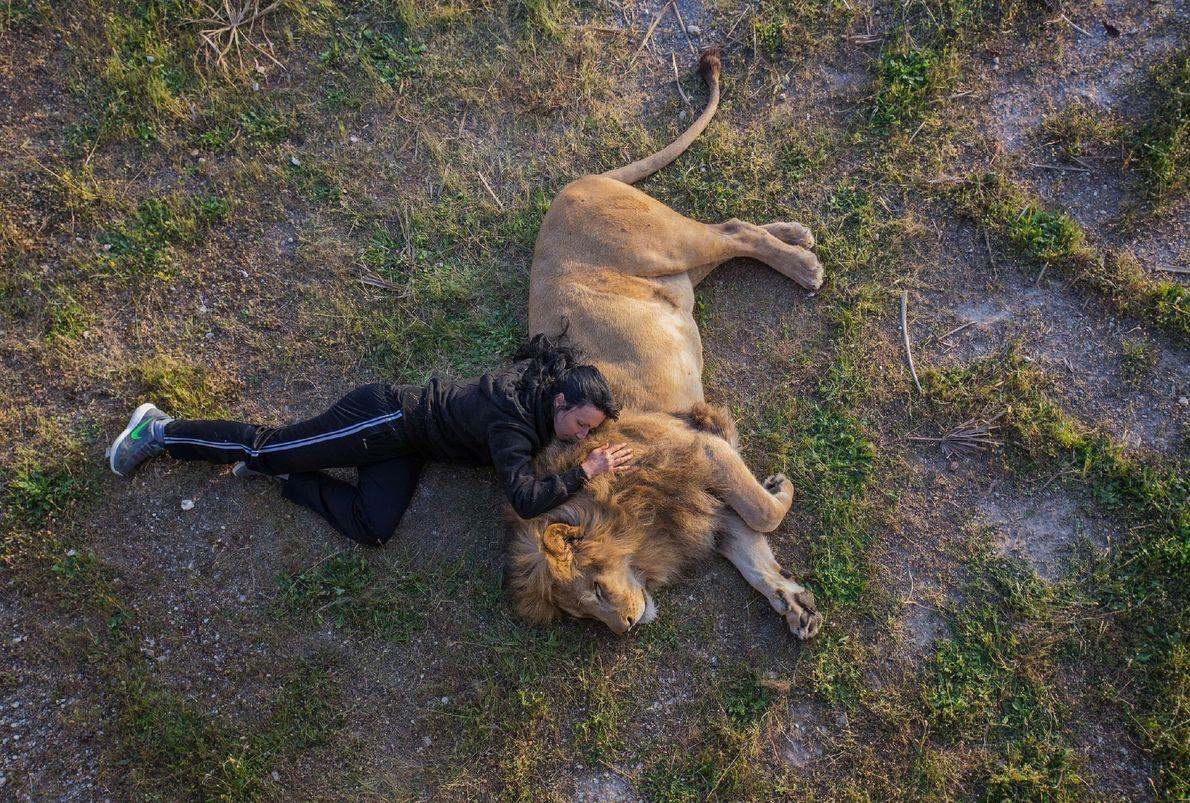Der Löwe schläft heut' Nacht