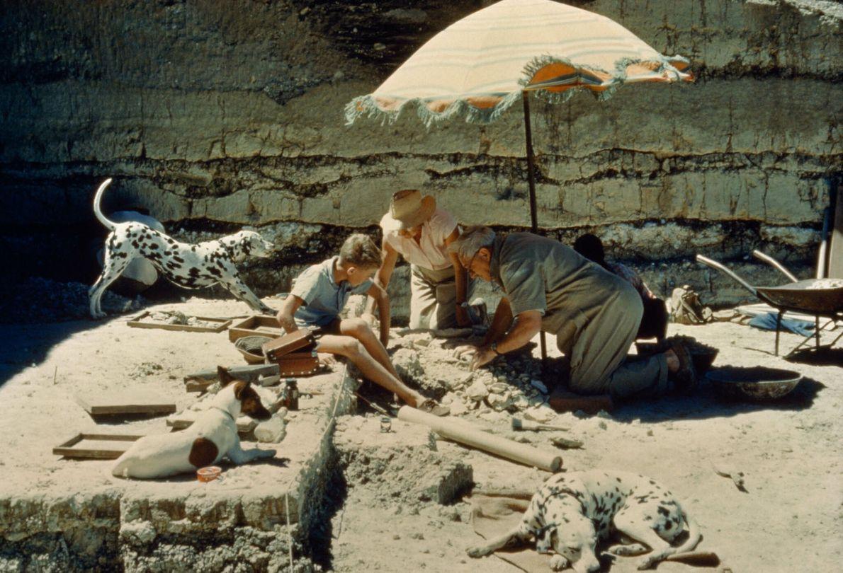 Menschen mit Hunden graben im sandigen Boden