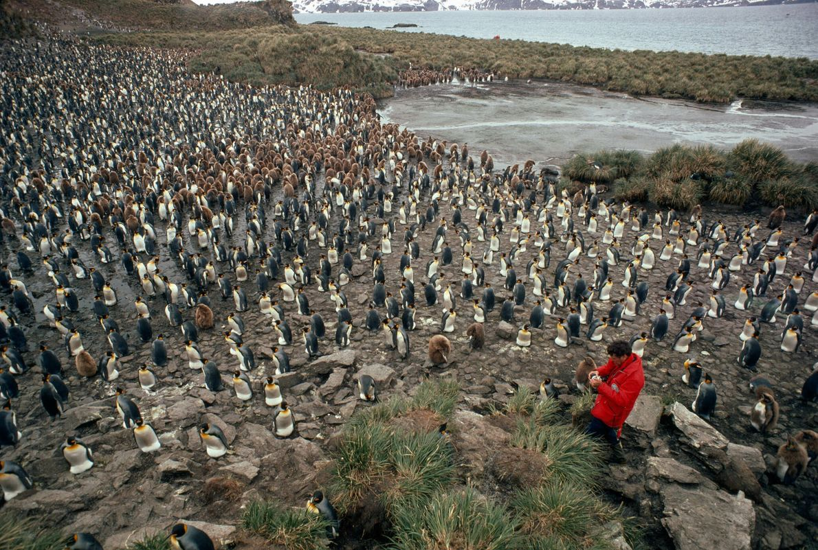 Mann in roter Jacke inmitten einer Pinguinkolonie