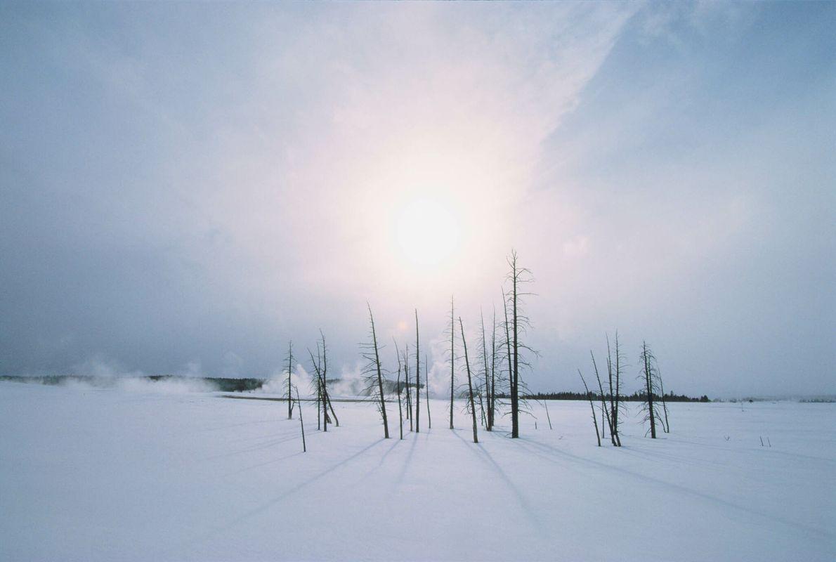 Tote Bäume in verschneiter Winterlandschaft