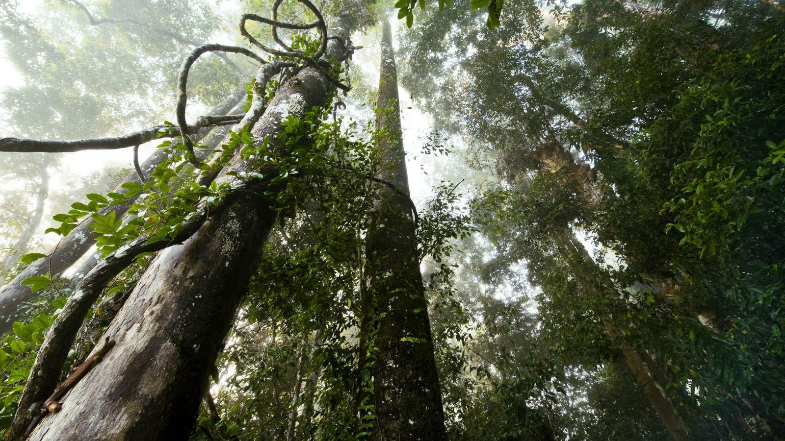 Borneos Wälder und die Palmölindustrie
