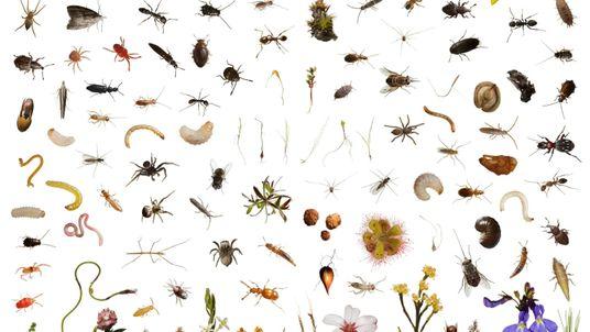Collage von Tier- und Pflanzenarten