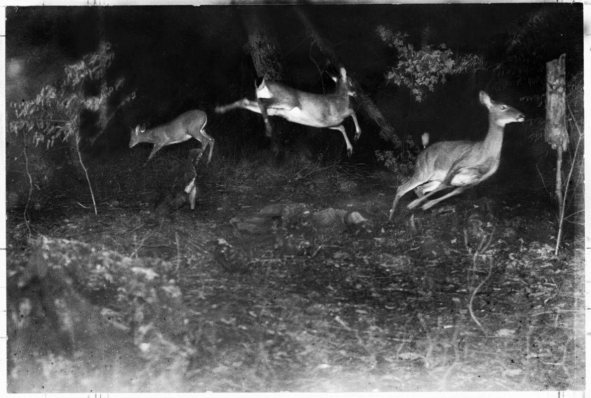 Hirsche bei Nacht