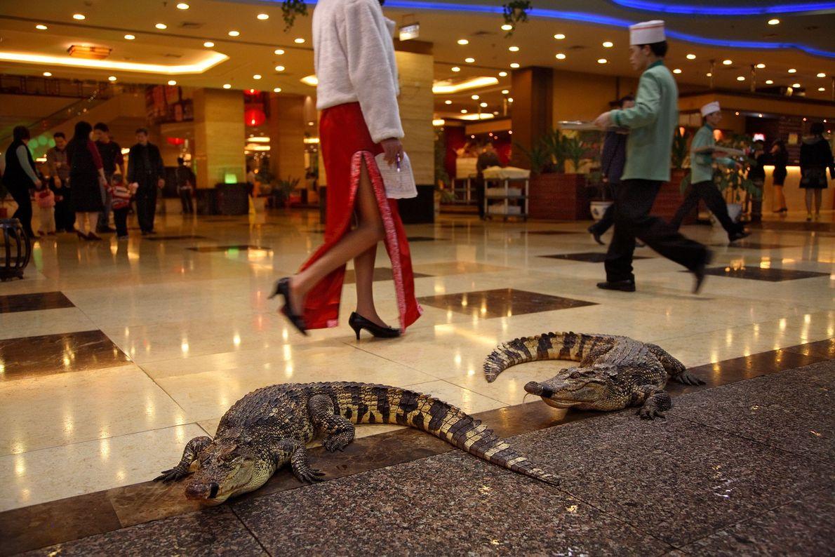 Krokodile in einem Kaufhaus