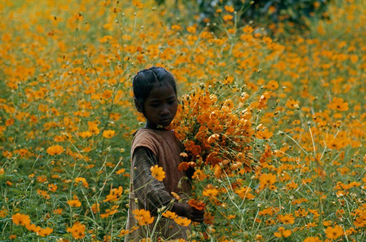Kind sammelt Blumen auf Madagaskar