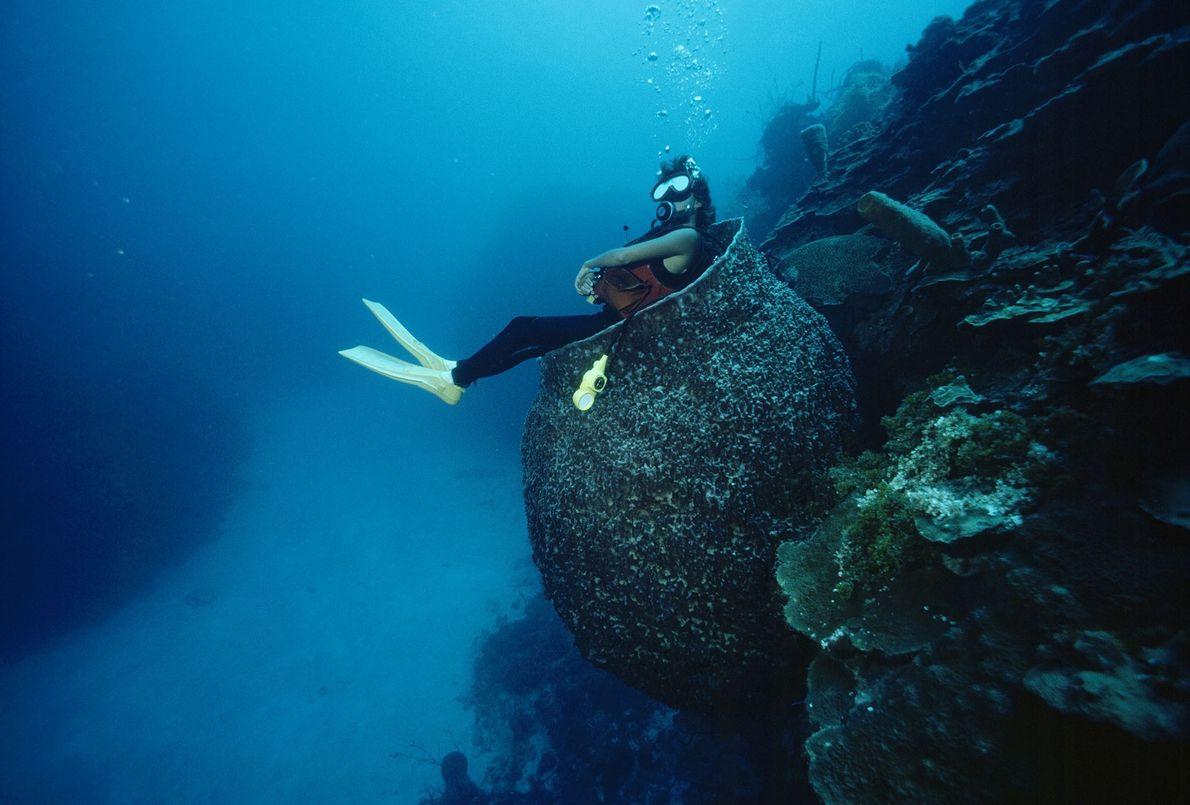 Taucherin vor den Cayman Islands