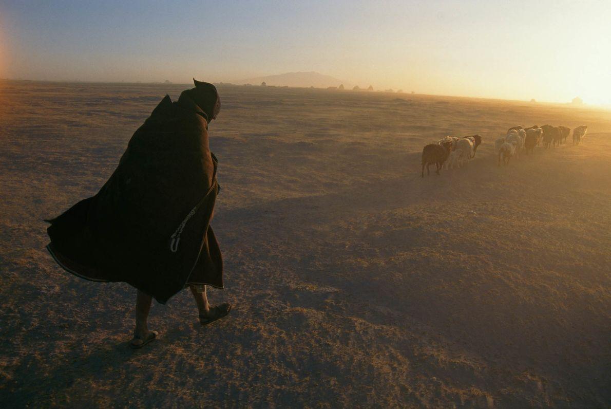 Uru-Chipaya-Frau mit Schafherde