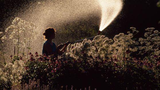 Frau wässert Kräutergarten mit Heilpflanzen