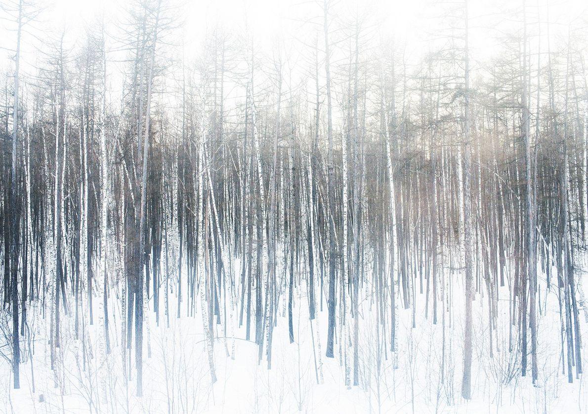 Schnee in der russischen Taiga