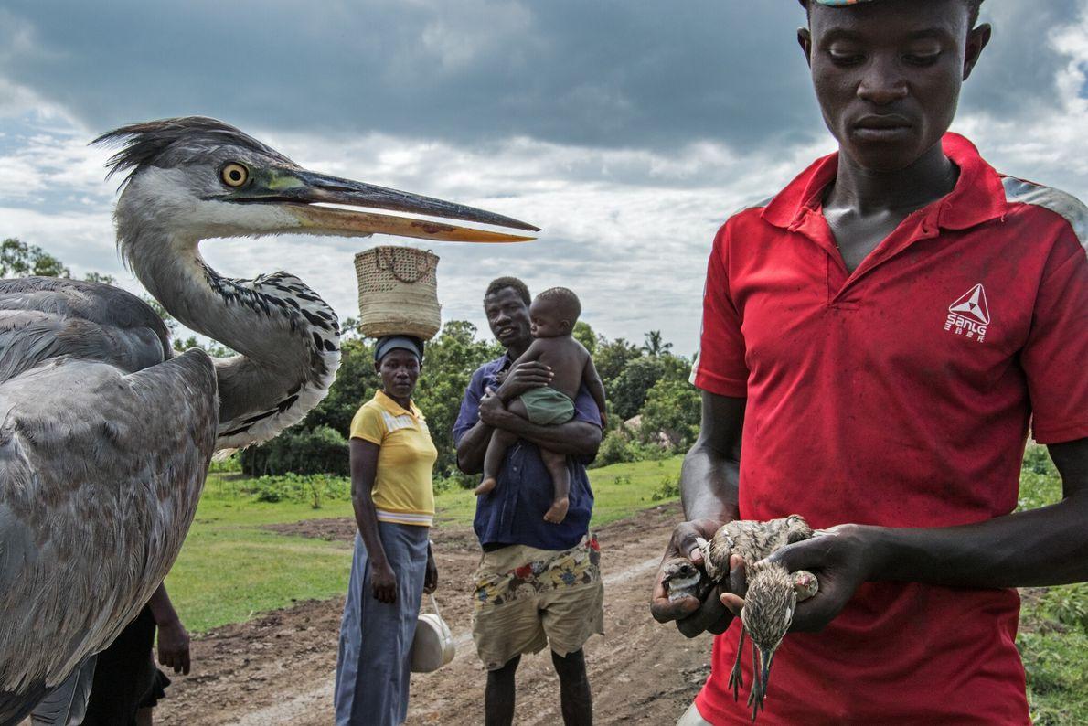 Naturschützer halten einen erkrankten Graureiher und andere Vögel