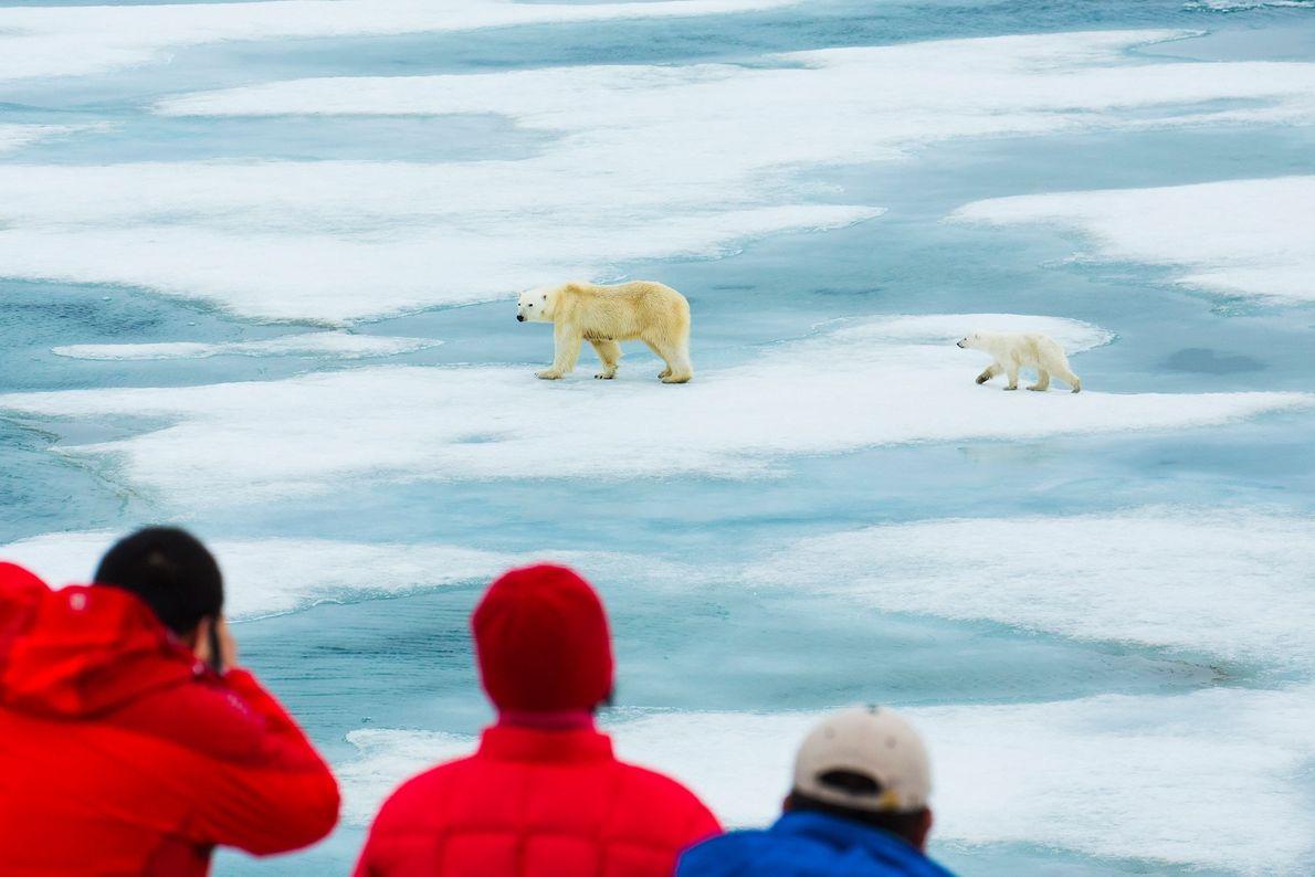 Besucher beobachten zwei Eisbären
