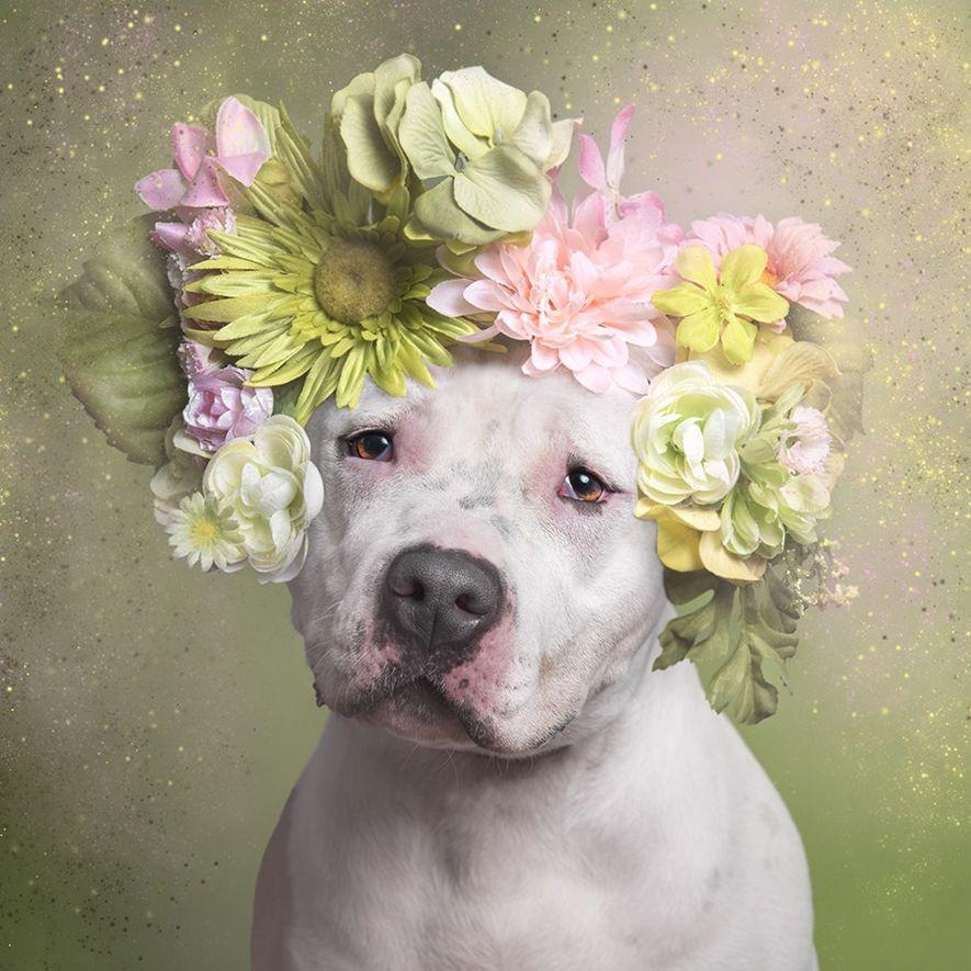 Prada wurde aus dem Town of Hempstead Animal Shelter auf Long Island, New York, adoptiert.