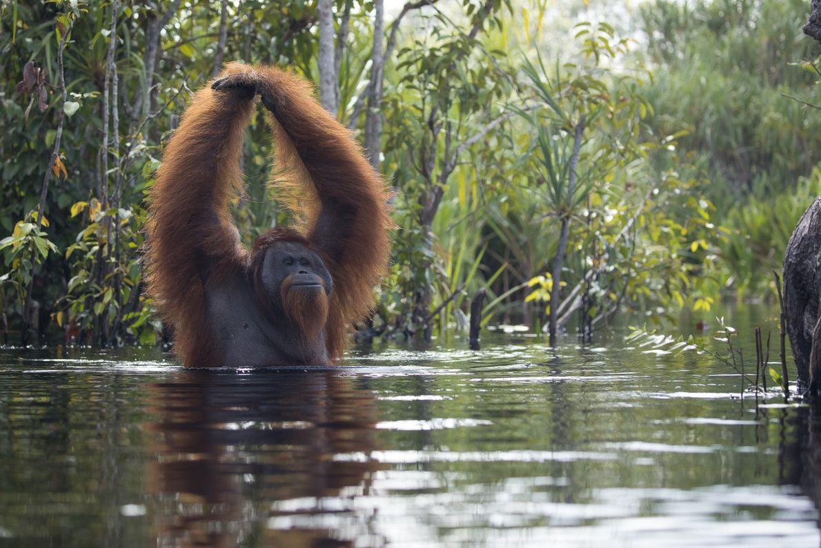 """""""Er hielt seine Hände in der Luft, als ob er sie nicht gern nass machen würde"""", ..."""