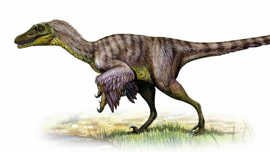 Warum Velociraptor nicht der Dinosaurier war, für den ihn viele halten