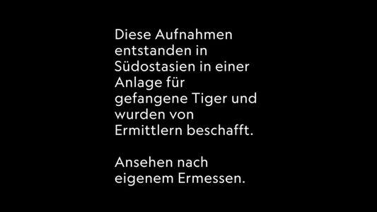 """Exklusiv: Illegaler Tigerhandel durch """"Tigerfarmen"""" gestützt"""