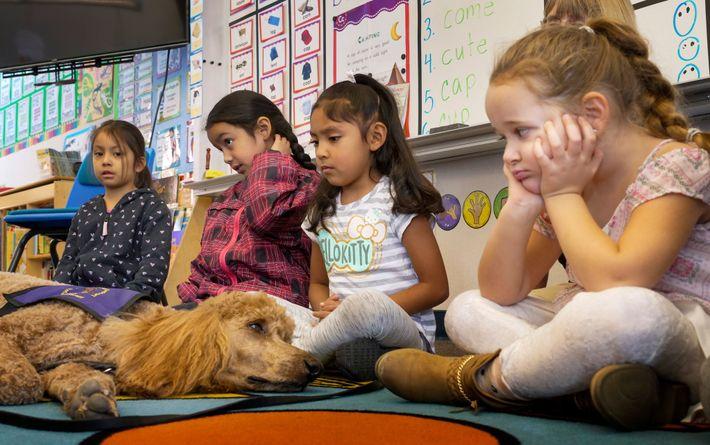 Schulkinder beäugen Rudy. Der Therapiehund war 2019 am ersten Schultag nach dem verheerenden Kincade-Feuer in Nordkalifornien ...