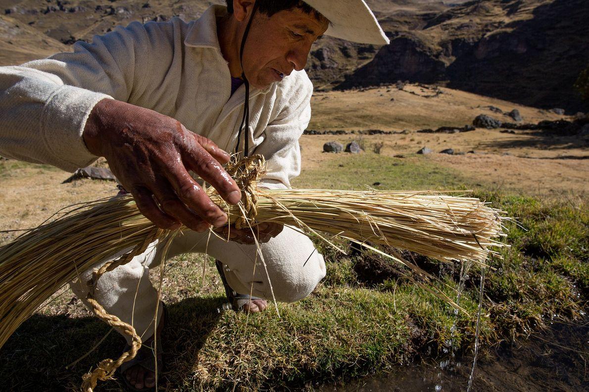 Das Ichu-Gras wird in Wasser eingeweicht, bevor es zu Seilen gedreht wird. Jede Familie, die sich ...