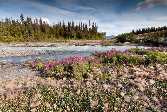 Wildblumen und Landschaft