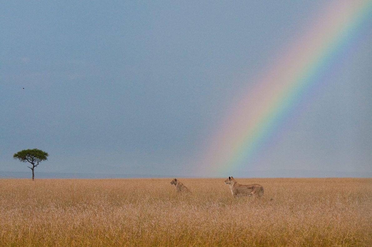 MAASAI-MARA-NATIONALPARK, KENIA