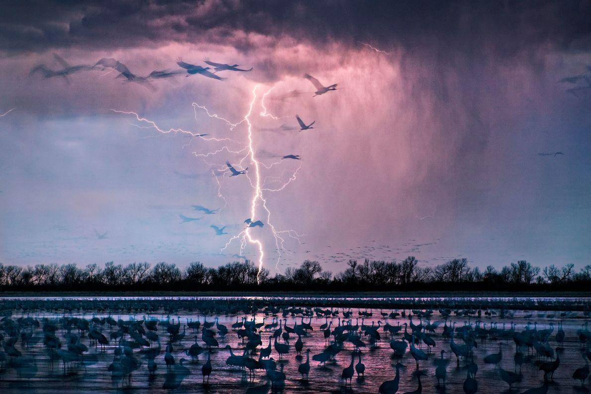 In Wood River in Nebraska war der Fotograf Randy Olson gerade dabei, sich hinter einem Tarnnetz ...