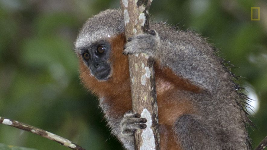 Amazonas: Jeden zweiten Tag wird eine neue Art entdeckt