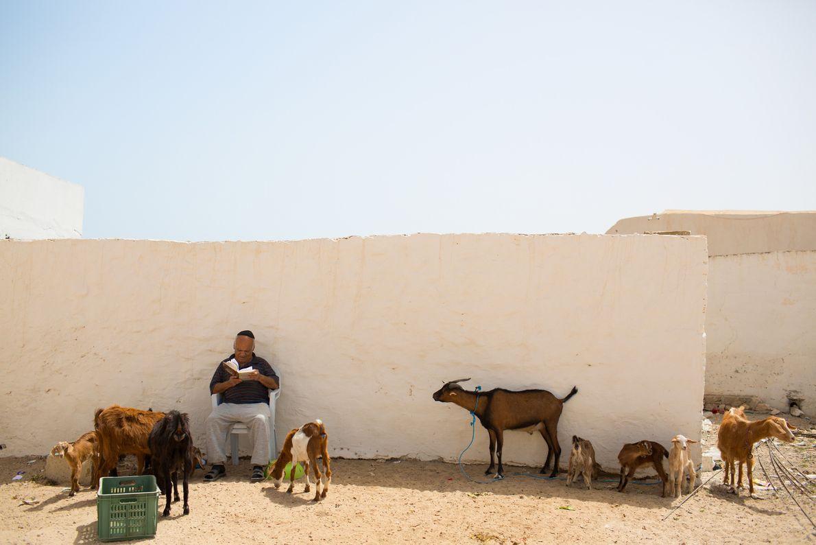 Lesender Mann und Ziegen