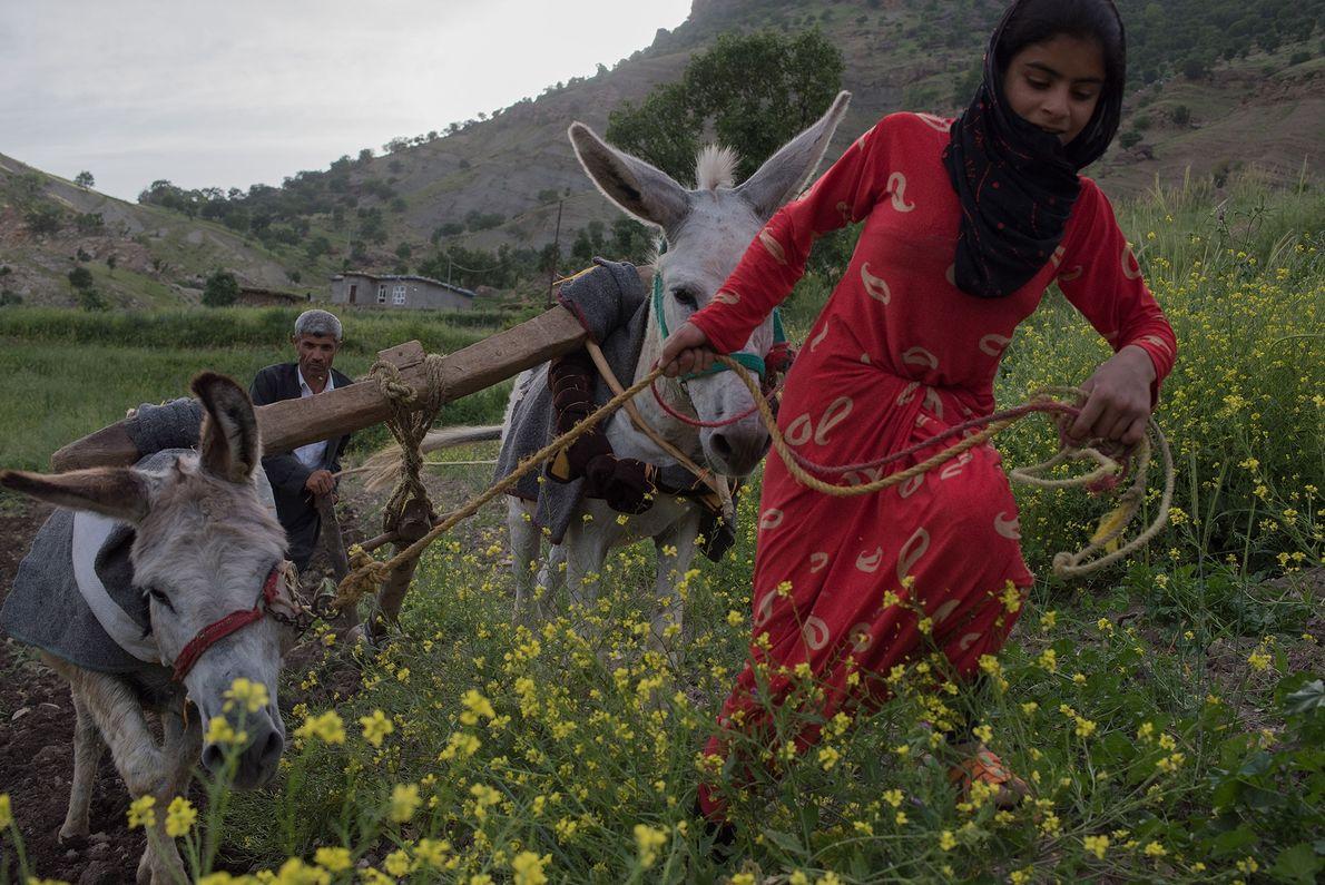 Ein kurdischer Bauer und seine Nichte bereiten den Acker in den Bergen an der Grenze zum ...