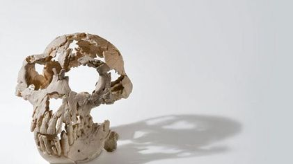 Galerie: Der erste Mensch