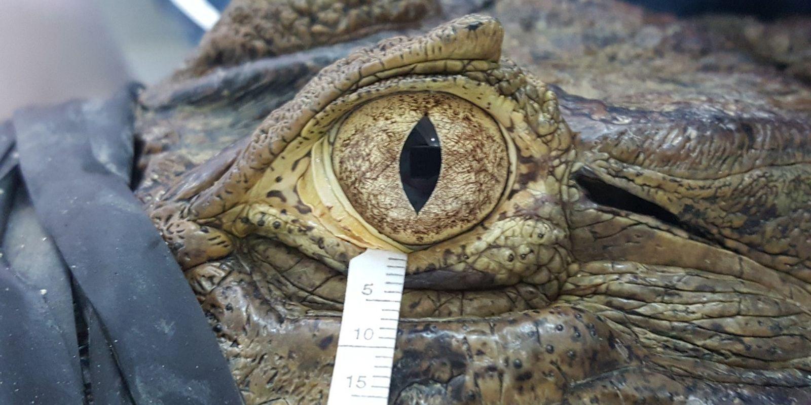 """""""Krokodilstränen"""" sind menschlichen Tränen ähnlicher als gedacht"""