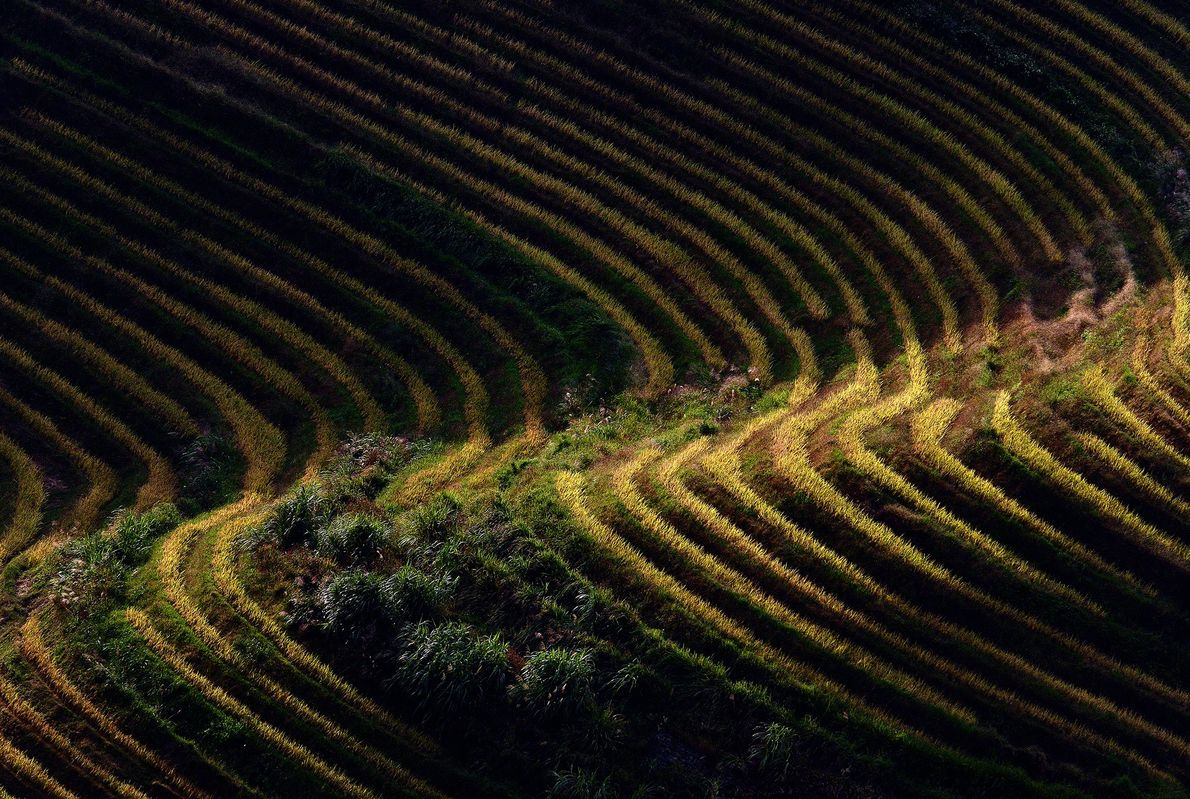 Longji Rice Terraces, China