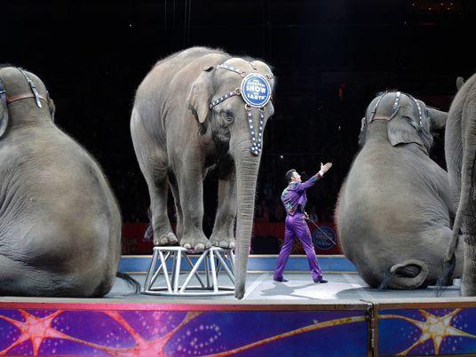 Endstation für Amerikas Zirkuselefanten