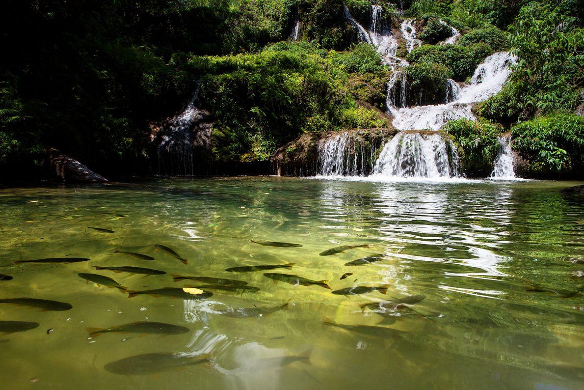 Rio de Peixe