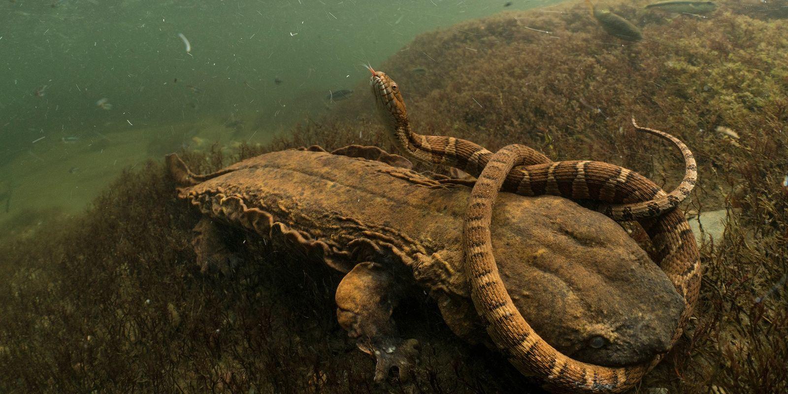 Die geheime Welt der Flüsse und Seen