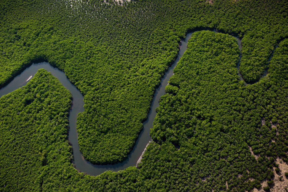 Ein Fluss schlängelt sich durch die grüne Vegetation der Tiwi-Inseln.