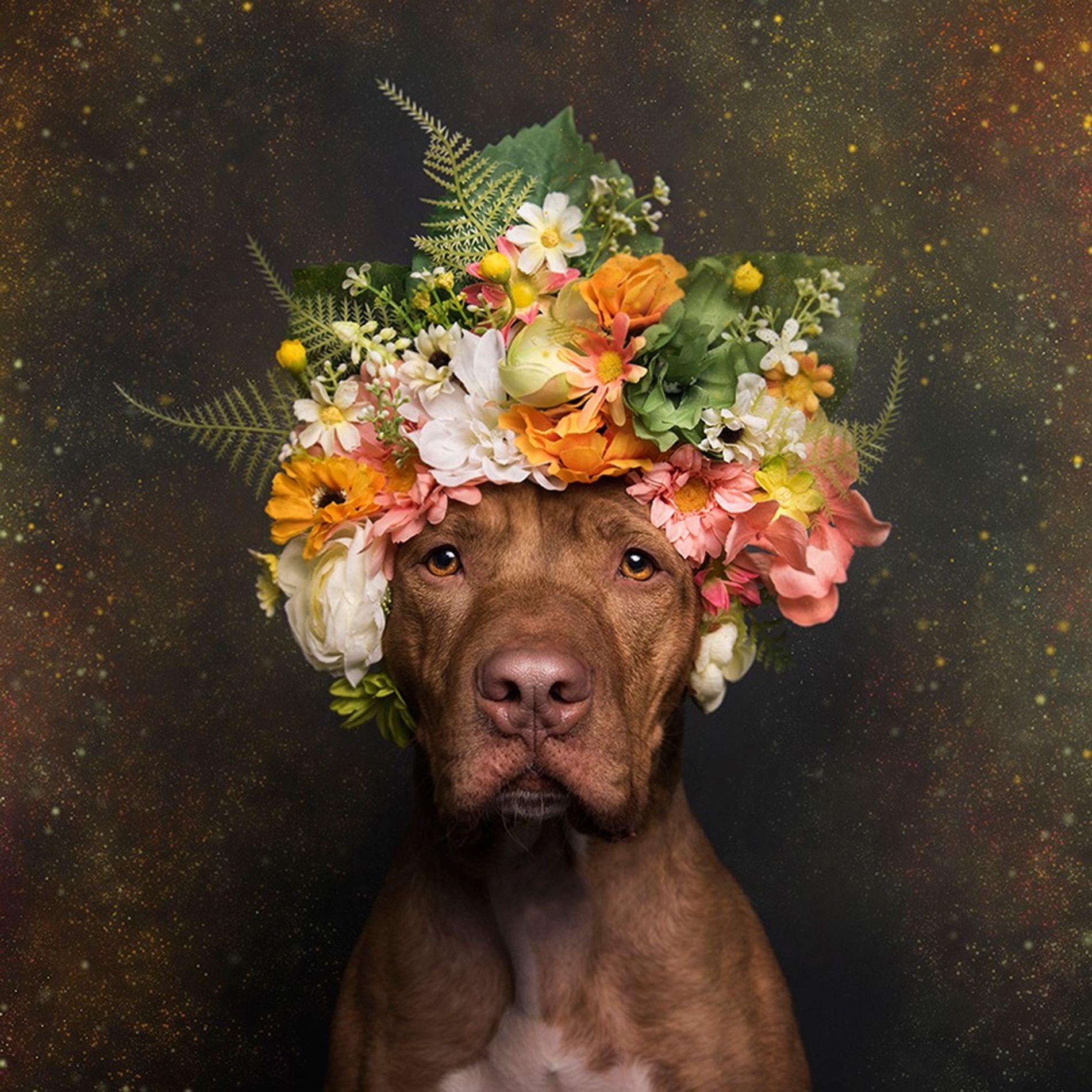 Rodger kann aus dem  Almost Home Animal Shelter in Pennsauken, New Jersey, adoptiert werden.